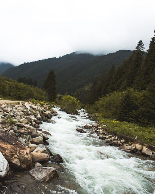 Gratis lagerfoto af å, bjerg, flod, malerisk