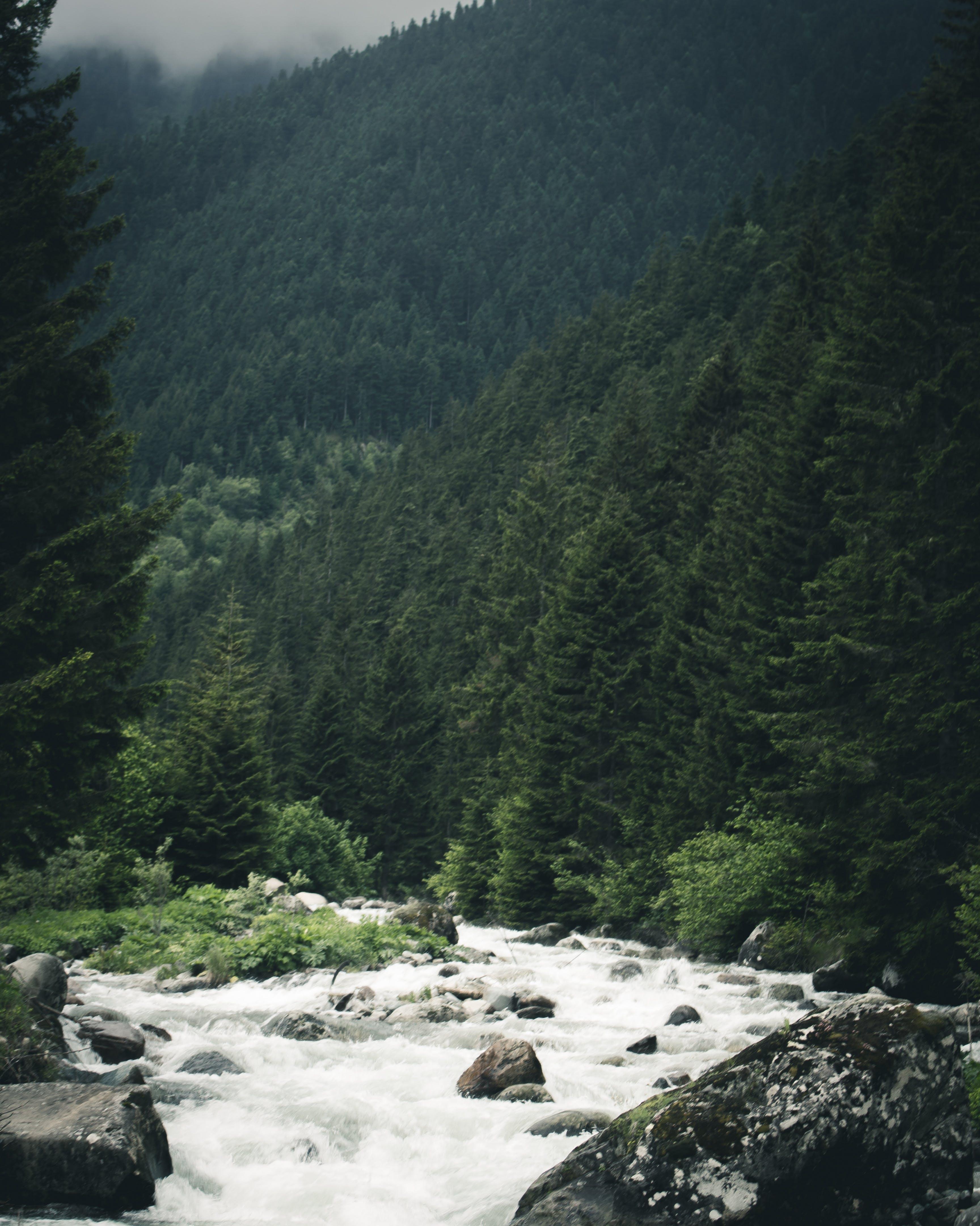 Imagine de stoc gratuită din apă curgătoare, arbori, cascadă, flux