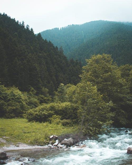 Foto d'estoc gratuïta de a l'aire lliure, arbres, corrent, medi ambient