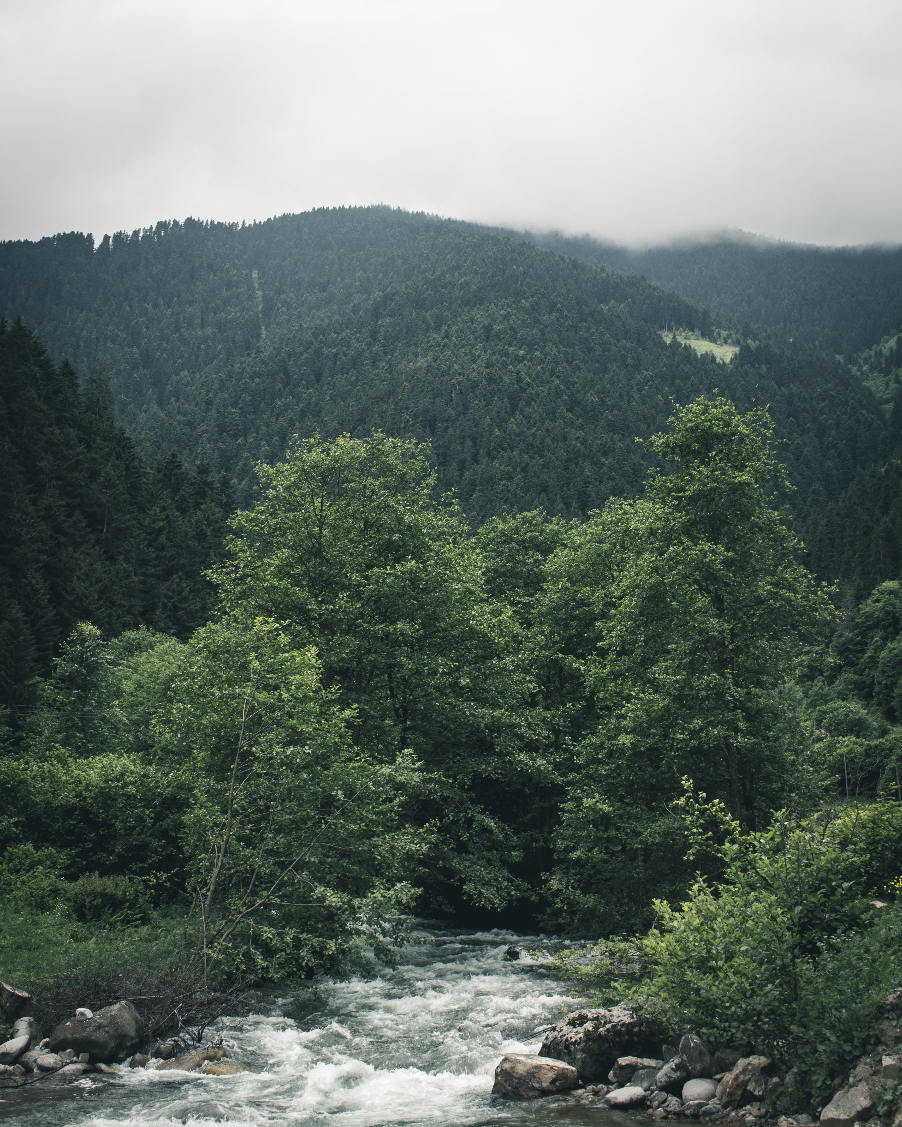 Δωρεάν στοκ φωτογραφιών με βουνό, γραφικός, δέντρα, ομίχλη