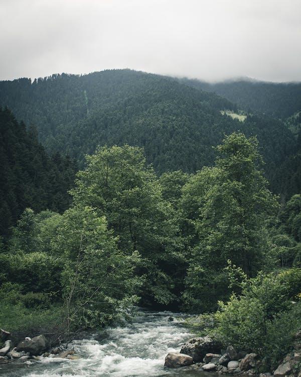drzewa, góra, krajobraz