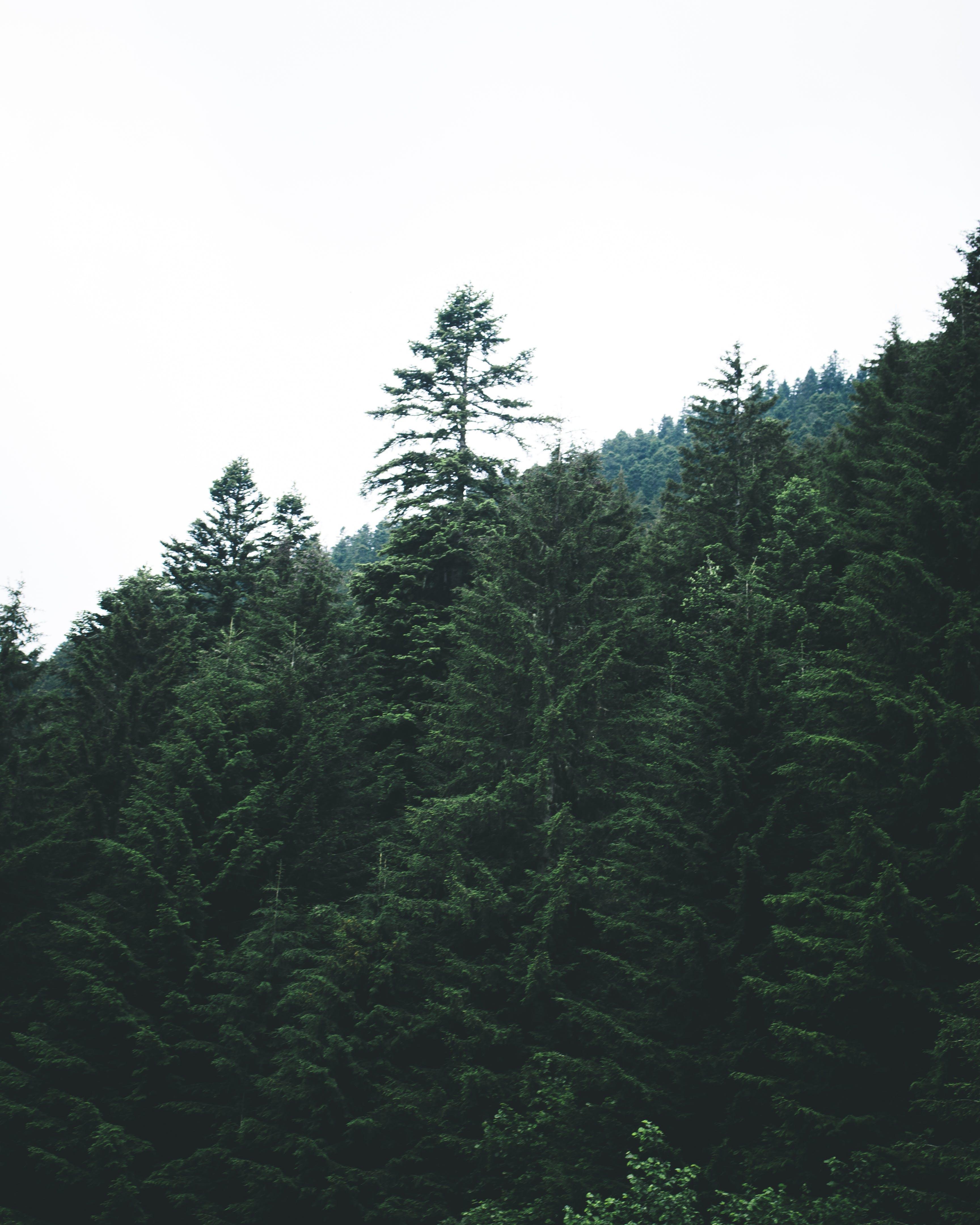 Δωρεάν στοκ φωτογραφιών με δασικός, δέντρα, ξύλα, σε εξωτερικό χώρο