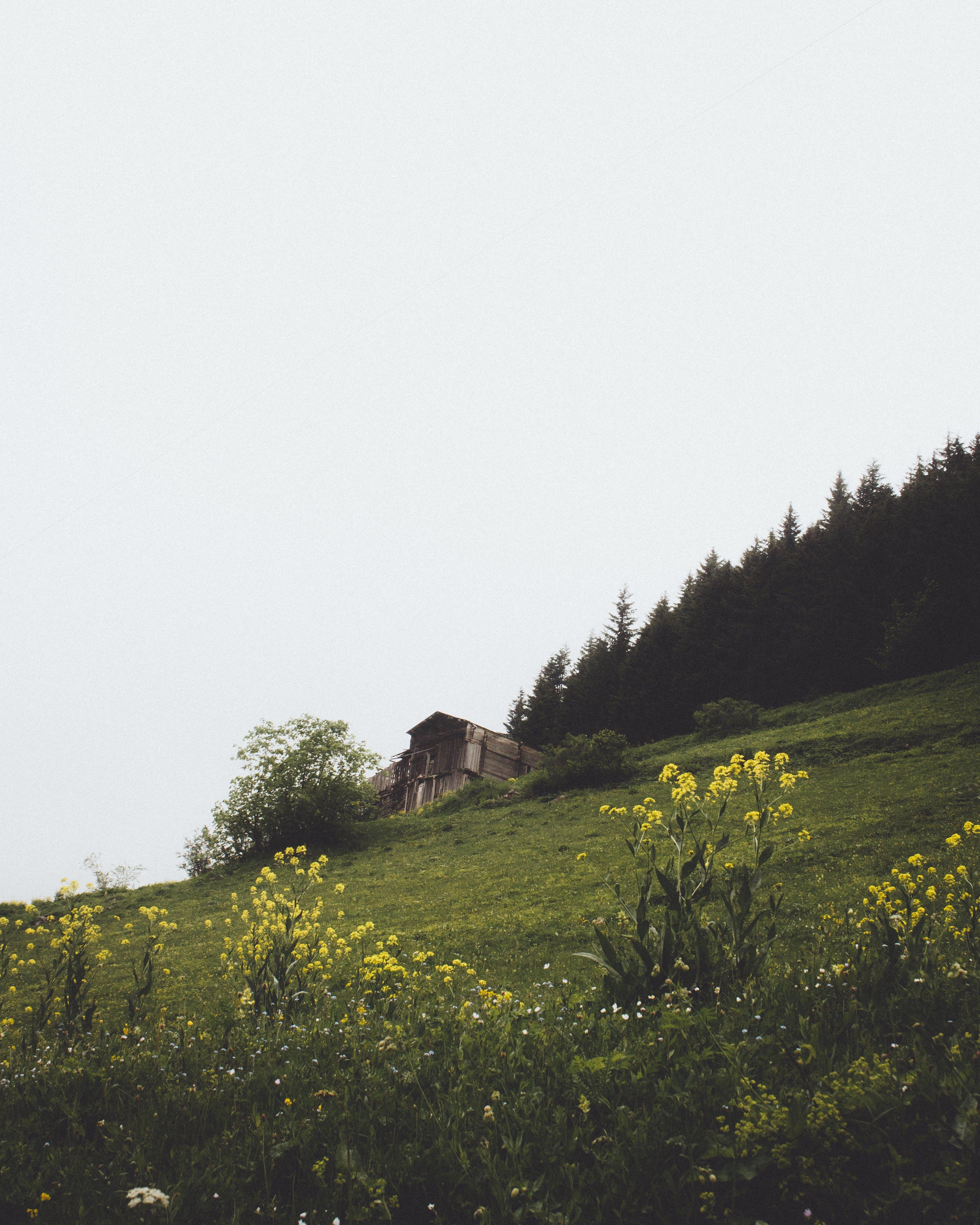 Δωρεάν στοκ φωτογραφιών με αγροτικός, ανάπτυξη, βουνό, γρασίδι