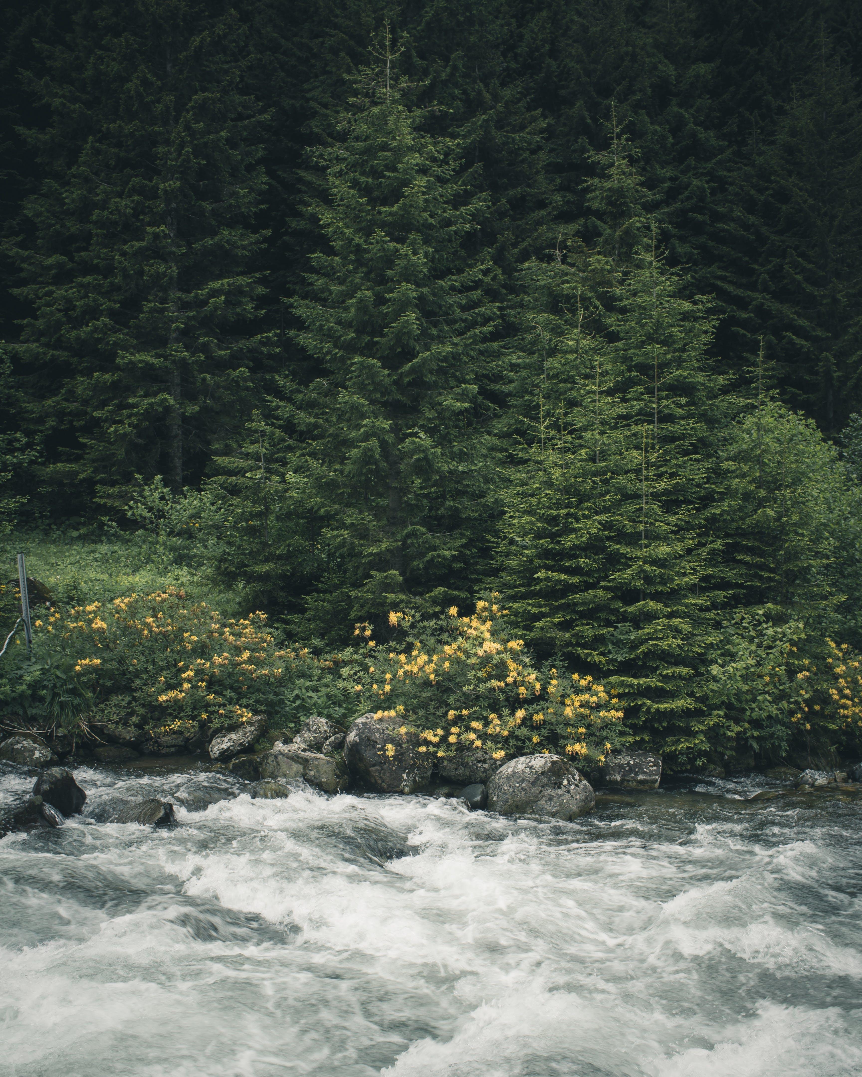 Ilmainen kuvapankkikuva tunnisteilla joki, luonto, metsä, puut