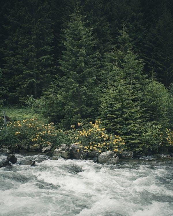 å, flod, malerisk