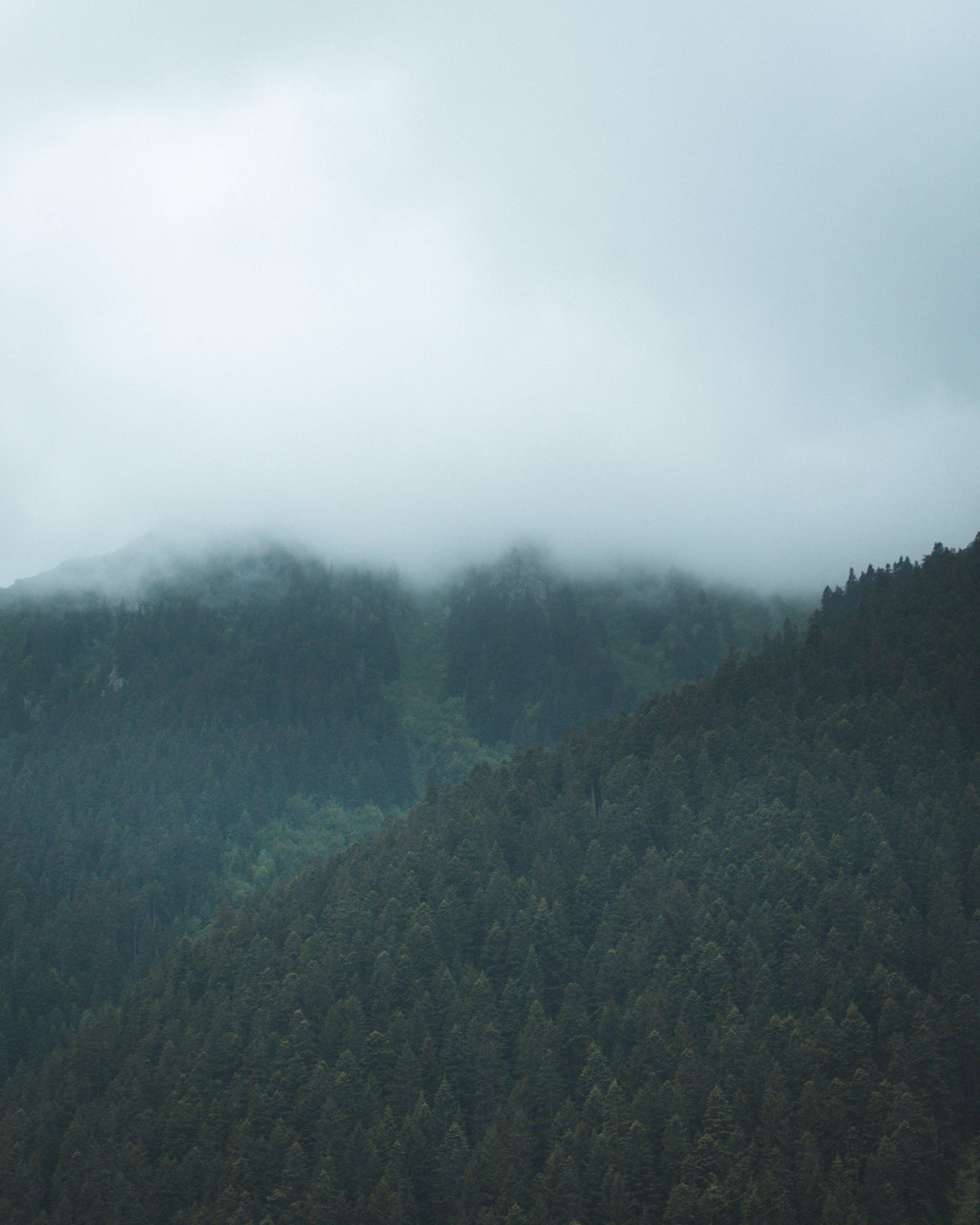 Δωρεάν στοκ φωτογραφιών με βουνό, δασικός, δέντρα, ομίχλη