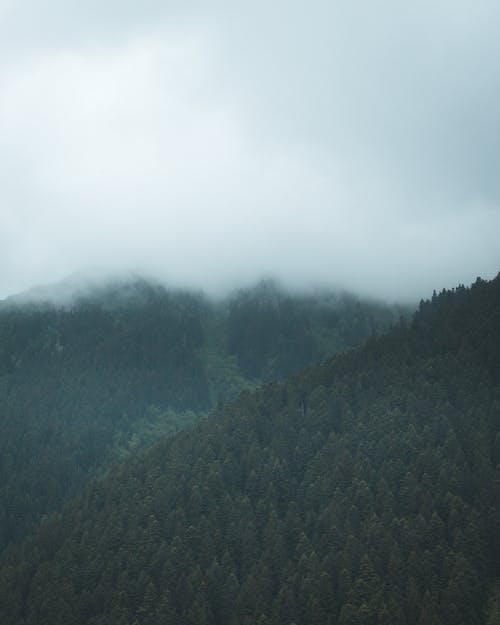 屋外, 山, 木, 森林の無料の写真素材