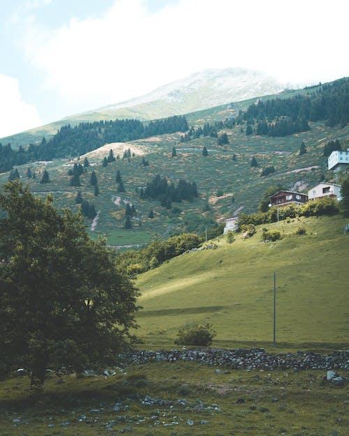 Foto profissional grátis de agricultura, campo, casas, colina