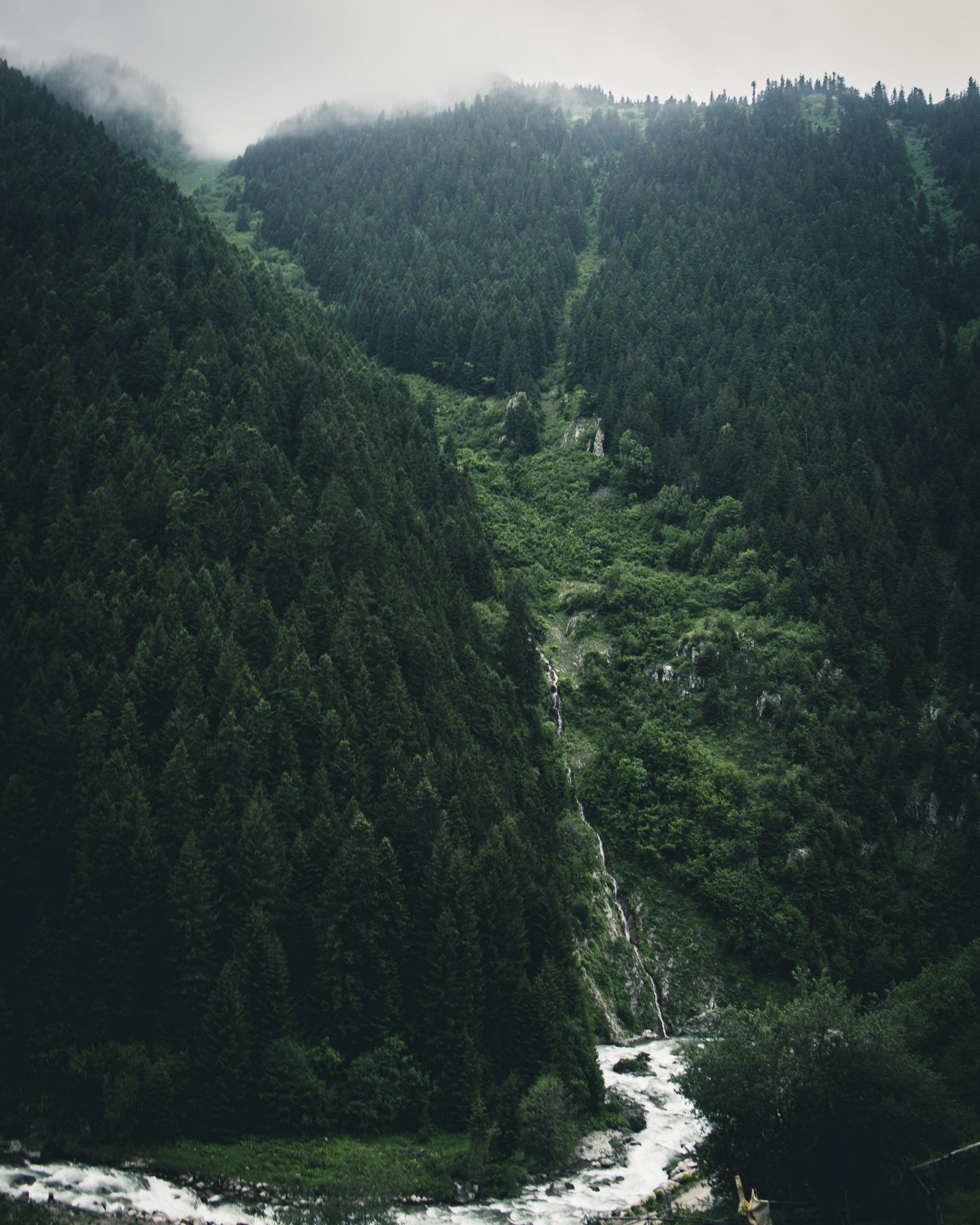 Ilmainen kuvapankkikuva tunnisteilla joki, luonto, puut, sademetsä