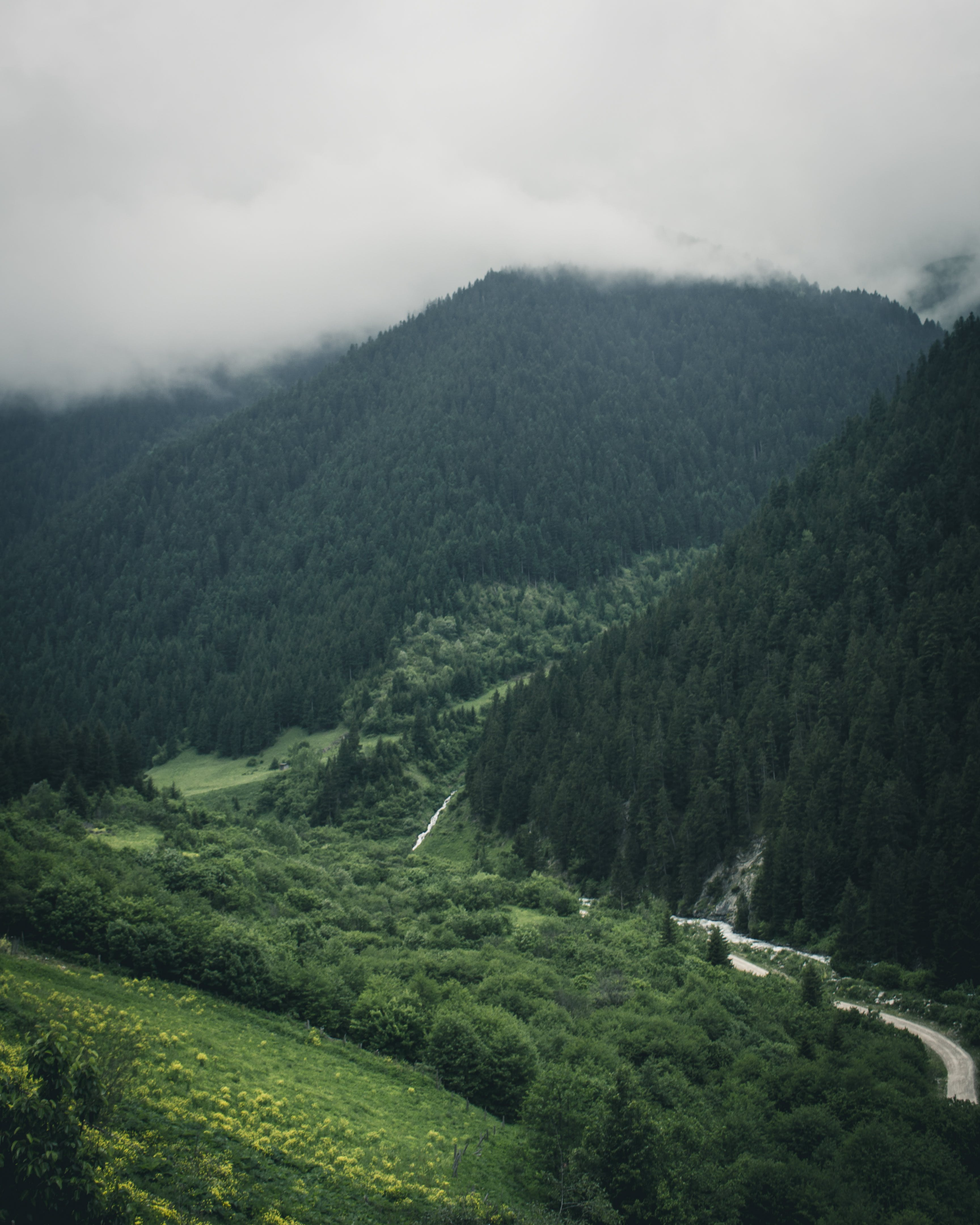Mountain Covered by Trees