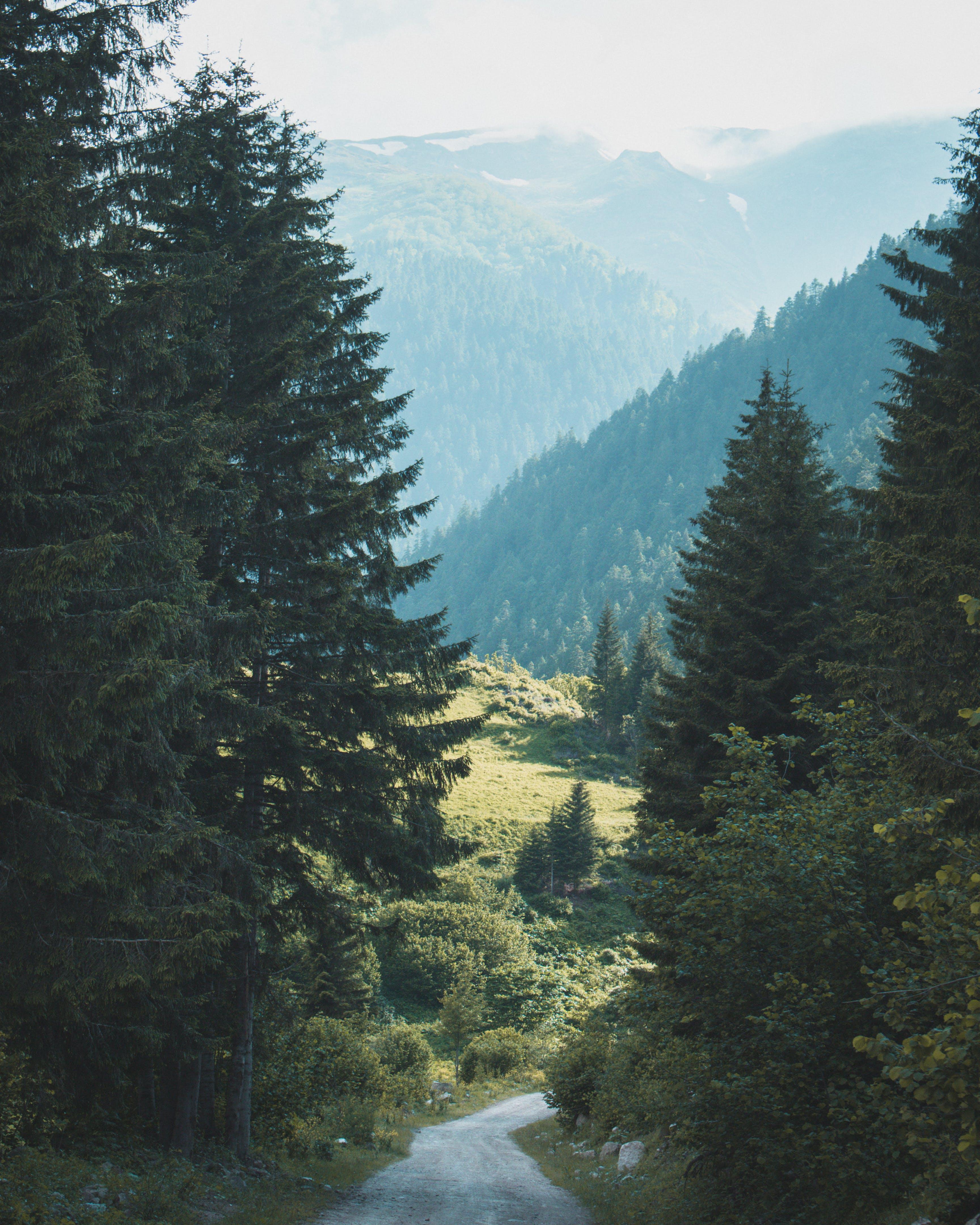 Δωρεάν στοκ φωτογραφιών με γραφικός, δέντρα, κοιλάδα, σε εξωτερικό χώρο