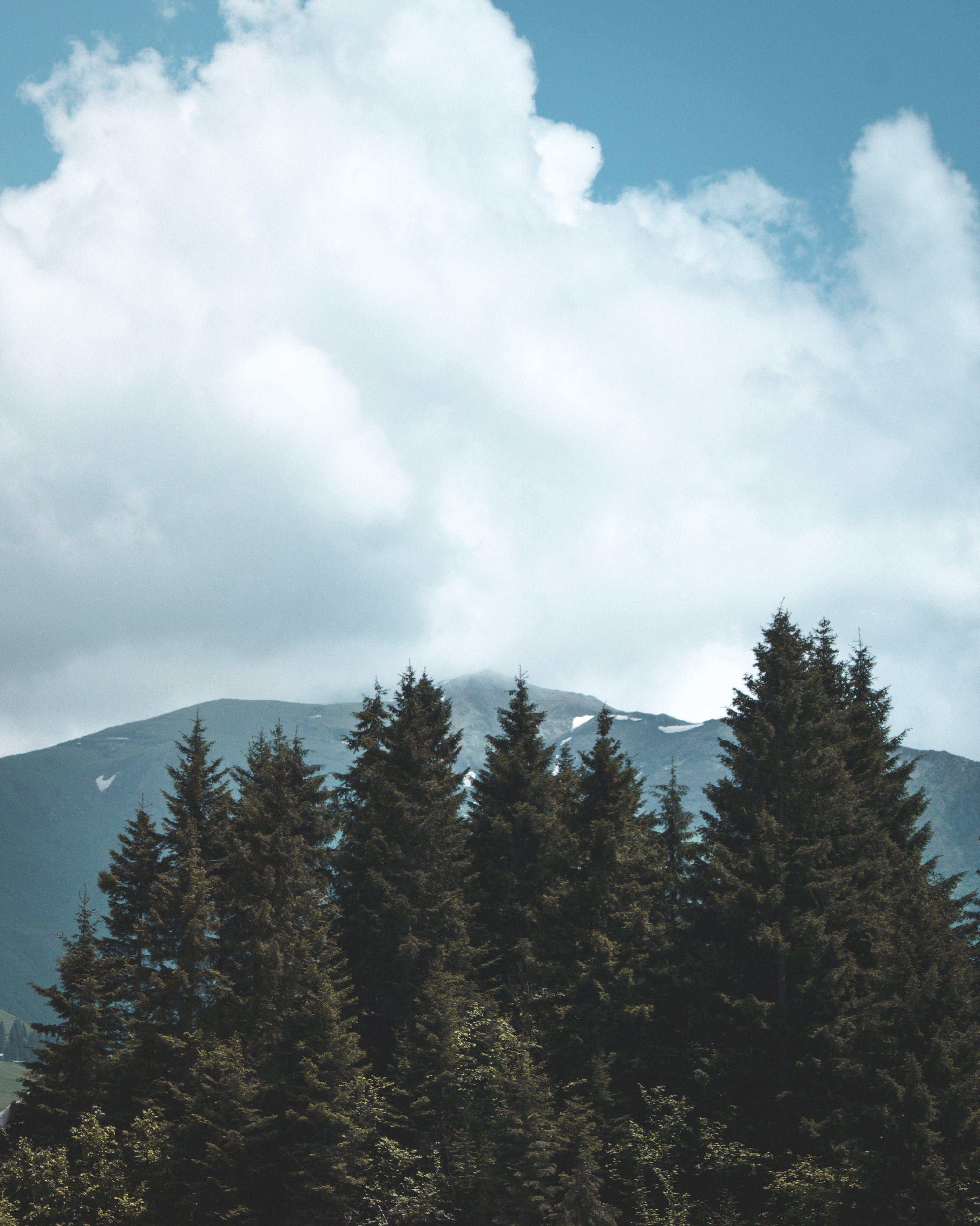 Ilmainen kuvapankkikuva tunnisteilla havupuut, kuva yläkulmasta, luonto, maisema