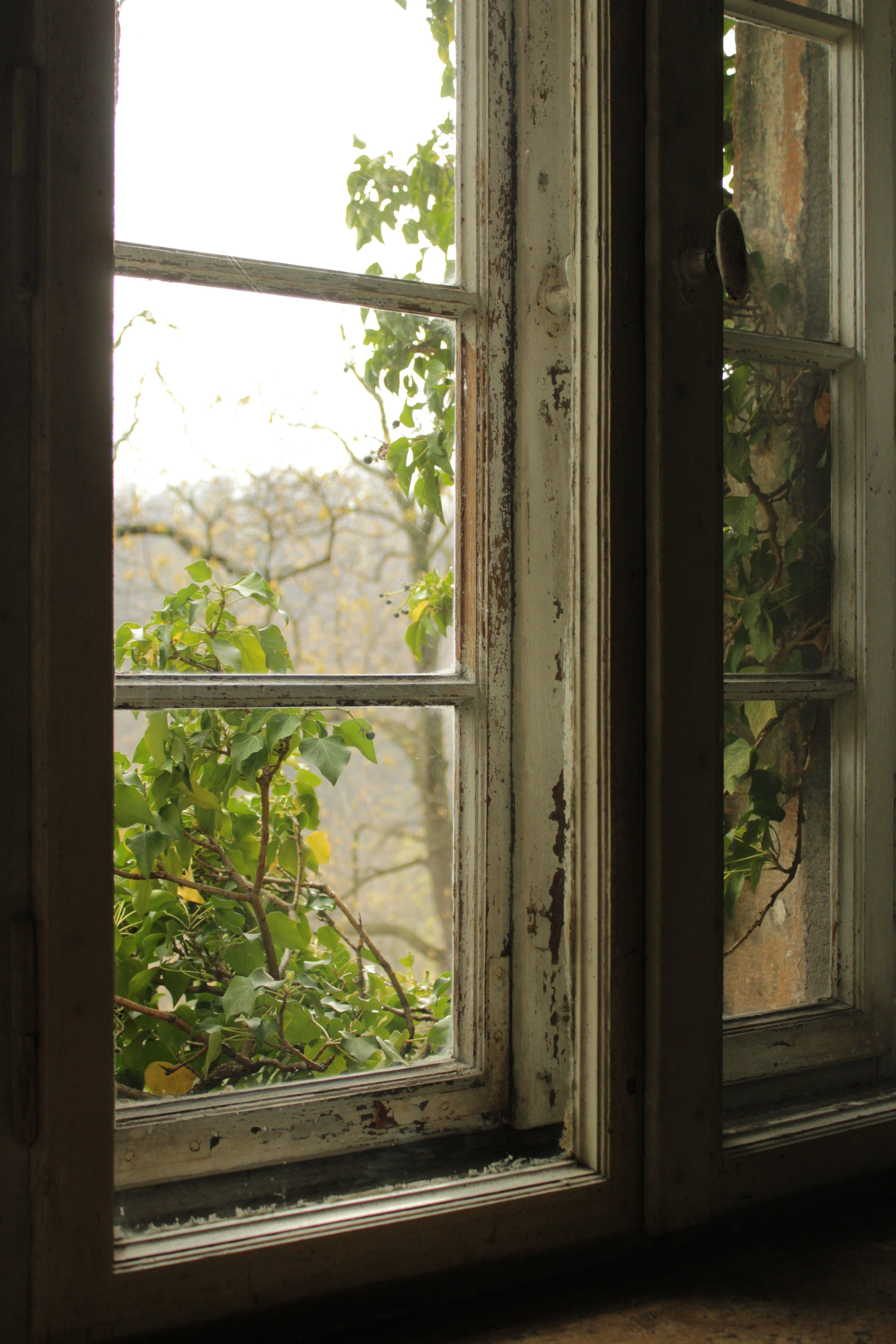 Foto d'estoc gratuïta de clareja, finestra, fusta, pintura