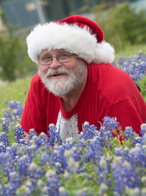 Free stock photo of bluebonnets, santa, Santa in the bluebonnets