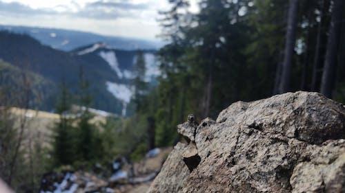 çam ağaçları, kar, kayalar, Mavi Dağlar içeren Ücretsiz stok fotoğraf
