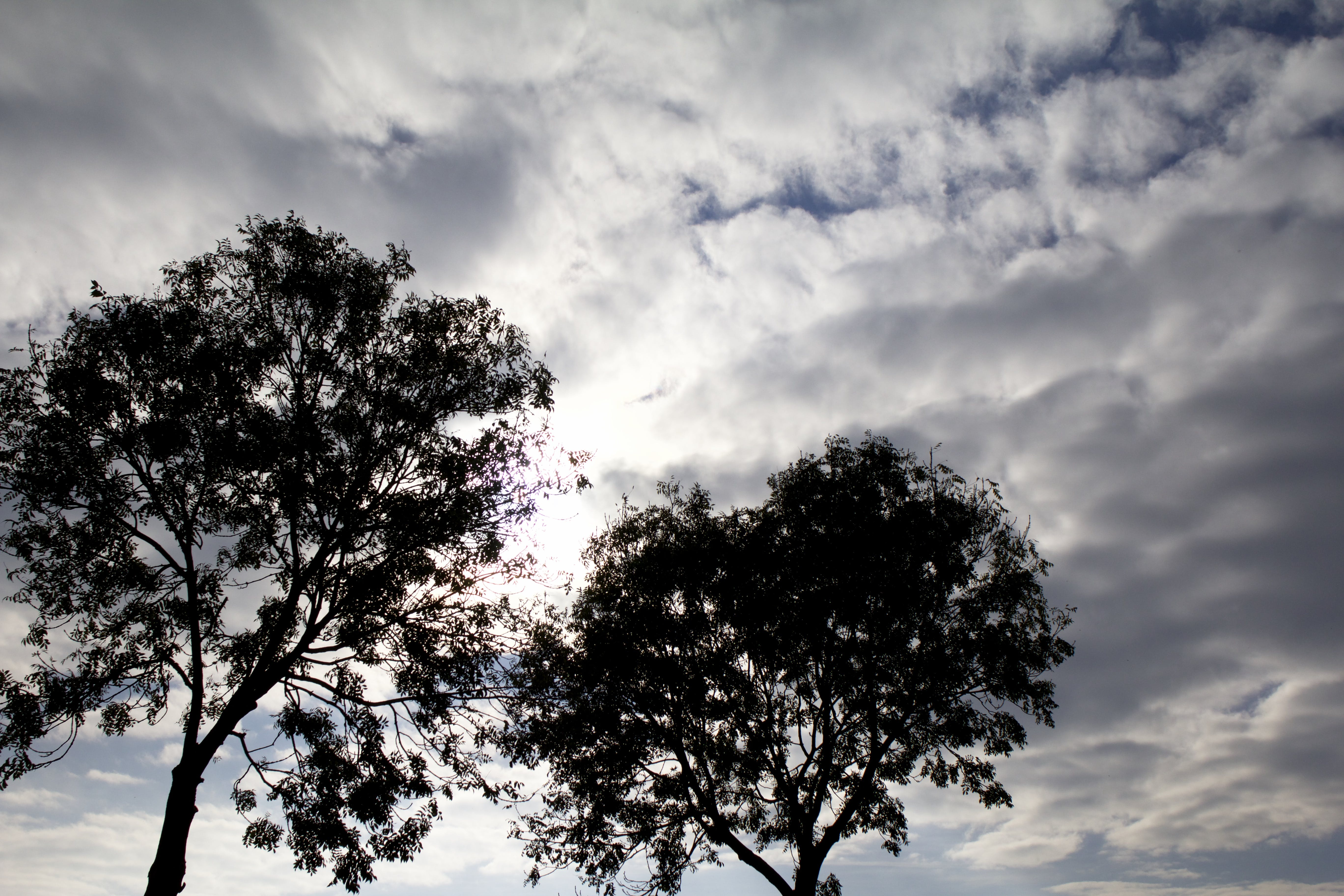 Free stock photo of clouds, morning sun, trees