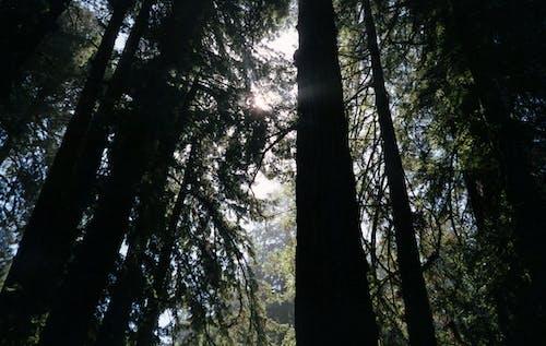 Imagine de stoc gratuită din arbori, codru, fotografie de unghi îngust, frunze