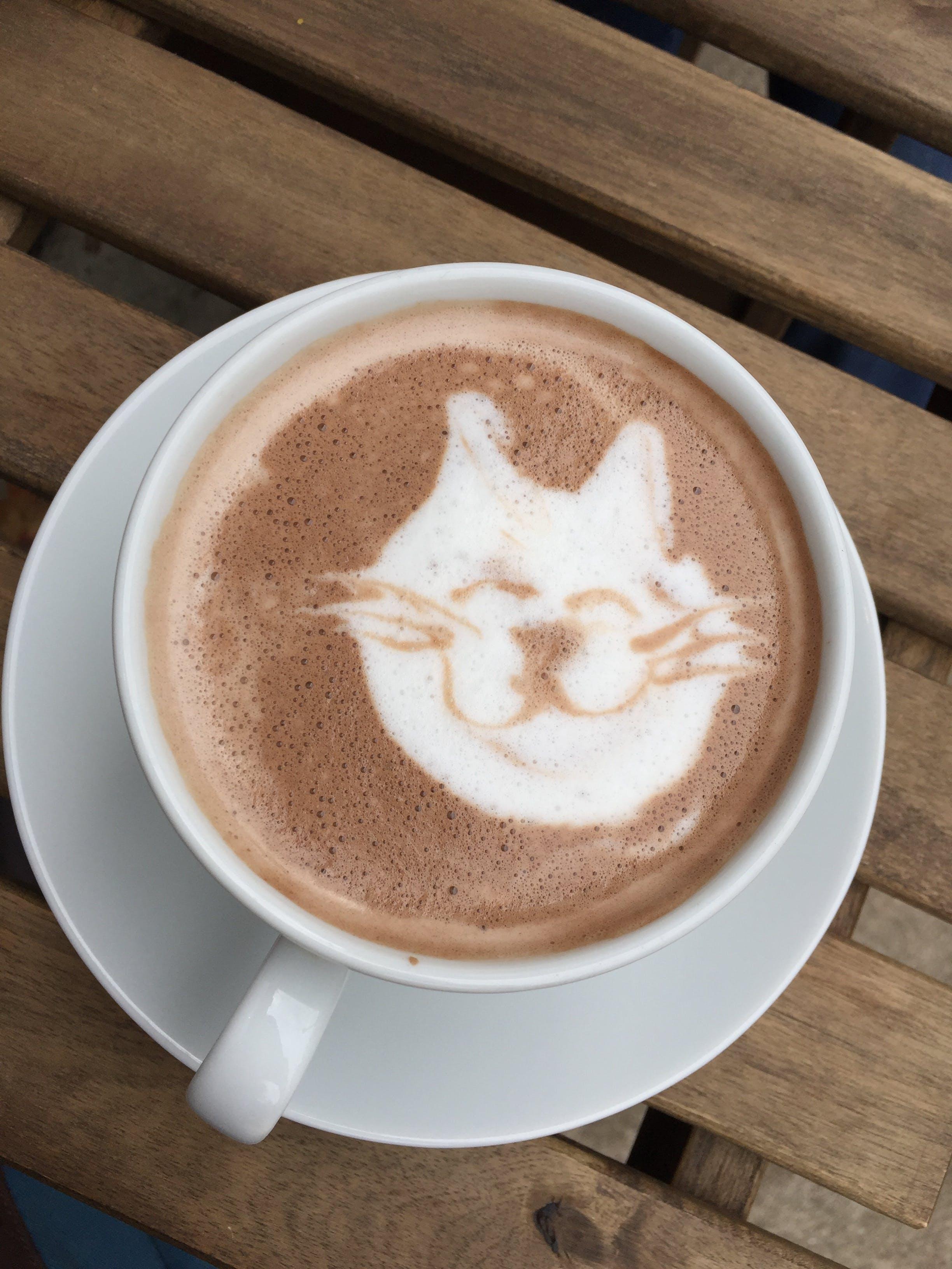 Free stock photo of cat, chocolate, cocoa, coffee