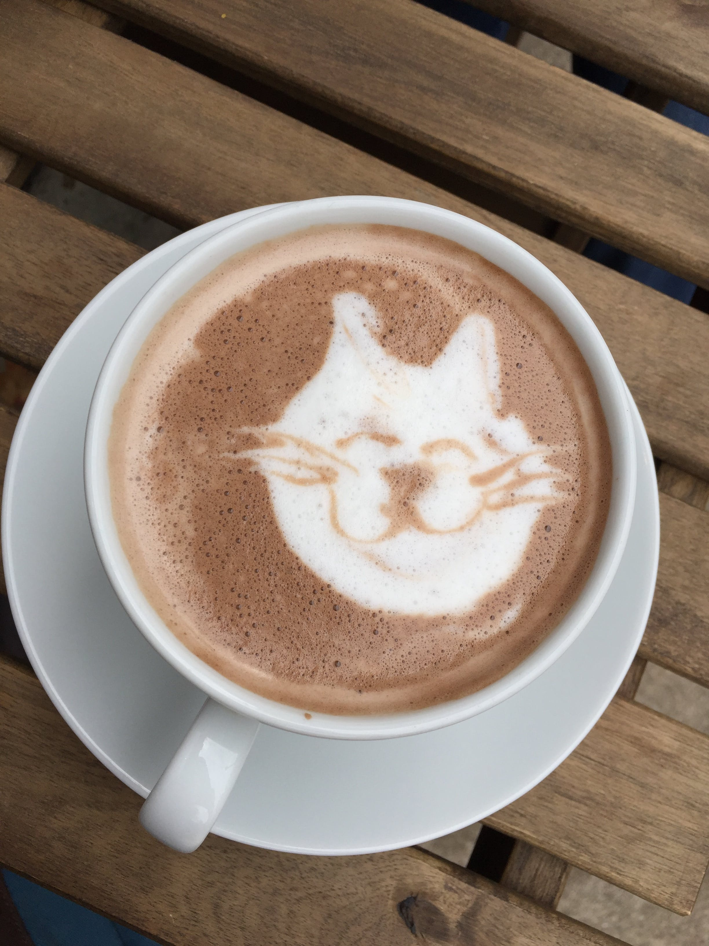Free stock photo of coffee, chocolate, cat, latte