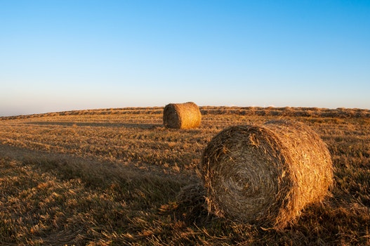 Free stock photo of sky, field, agriculture, harvest