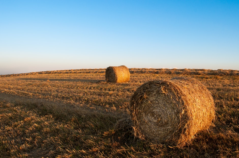 agriculture, farming, field