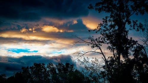 Free stock photo of dusk, sky, sunset, trees