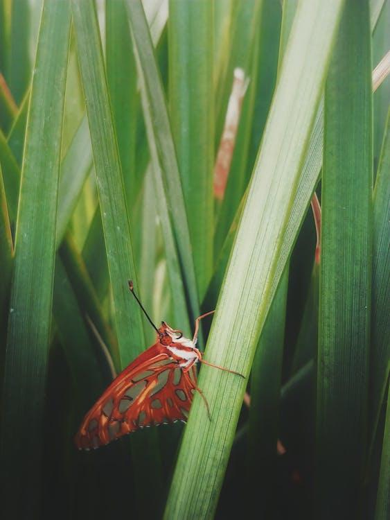 butterfly, grass, green