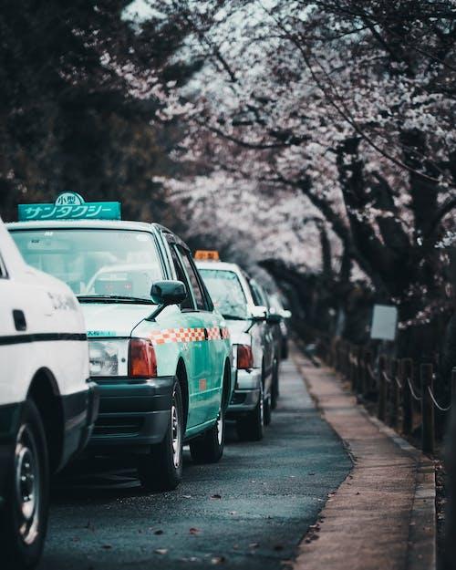 arabalar, Kiraz çiçekleri, sokak, taksi içeren Ücretsiz stok fotoğraf