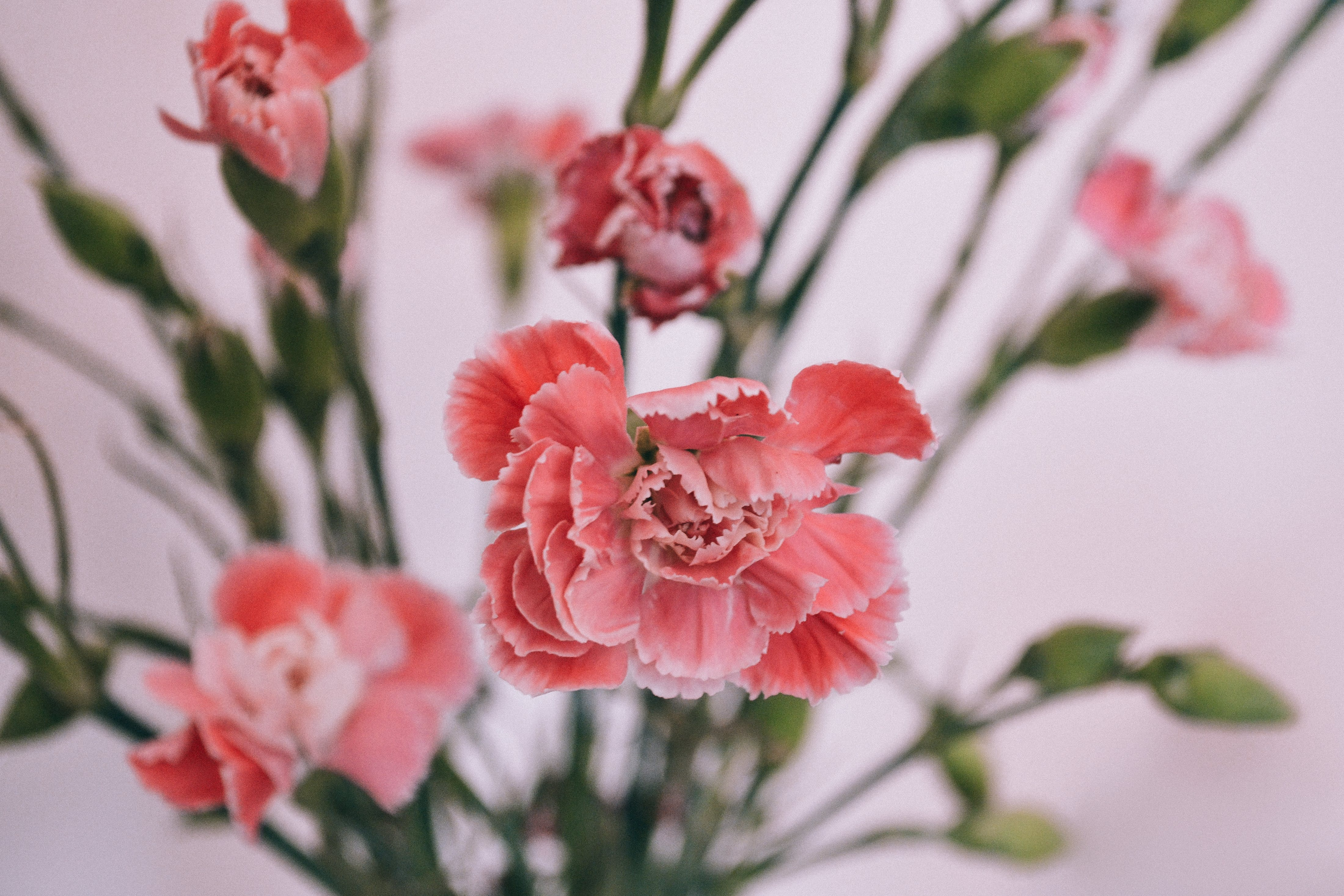 Shallow Focus Photography of Red Flowers