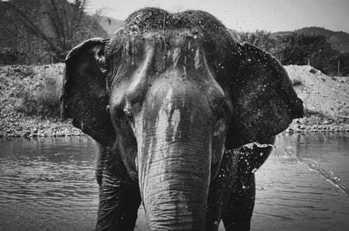 Elephant on Body of Water Near Plant