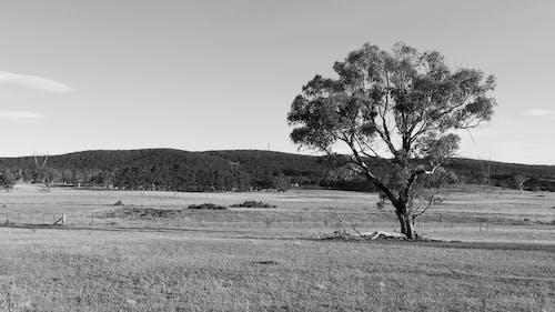 Foto d'estoc gratuïta de arbre, blanc i negre, natura