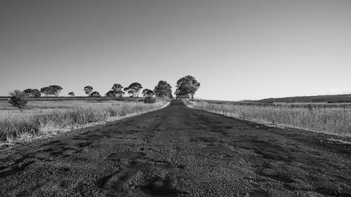 Foto d'estoc gratuïta de arbust d'austràlia, autopista, blanc i negre, bnw