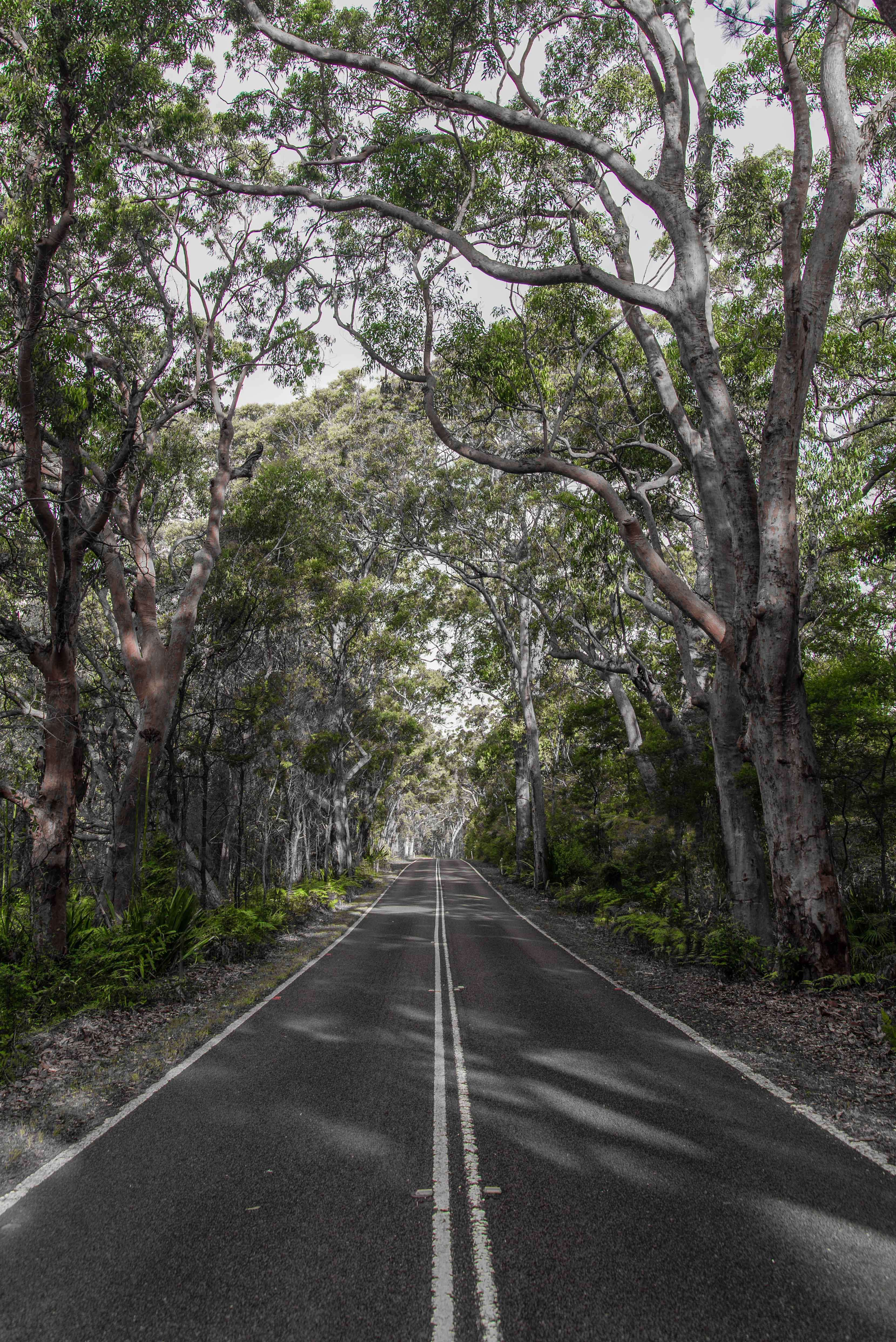 Free stock photo of australia, nature, raw, Royal National Park