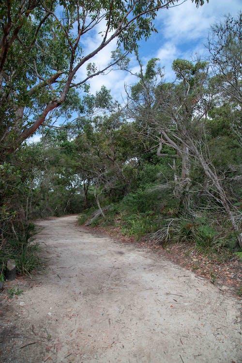 樹木, 澳大利亞, 皇家国家公园, 美丽的风景 的 免费素材照片