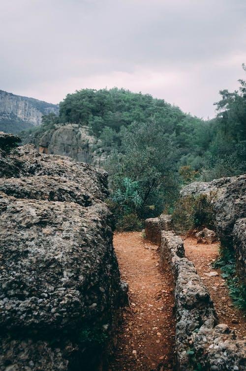 Gratis lagerfoto af asfalteret vej, bjerge, dagslys, grøn