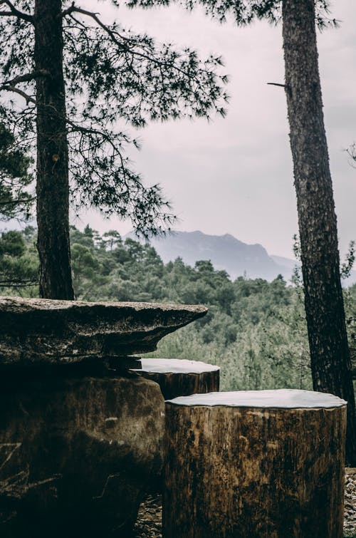 景觀, 木柴, 桌子, 樹 的 免費圖庫相片