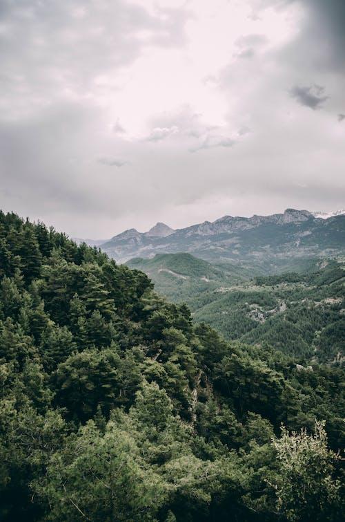 Fotos de stock gratuitas de bosque, cielo nublado, nublado, paisaje