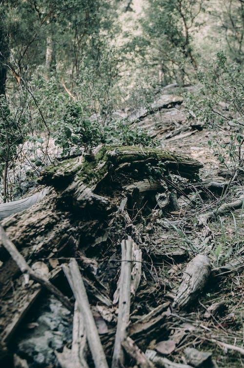 Imagine de stoc gratuită din codru, lemn, putrezi