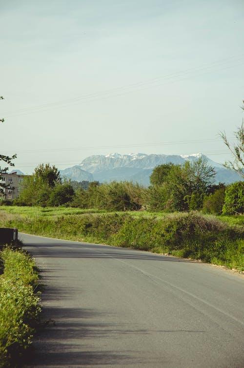 Imagine de stoc gratuită din drum, munte, verde