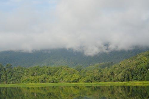 Immagine gratuita di acqua, alberi, estate, legno