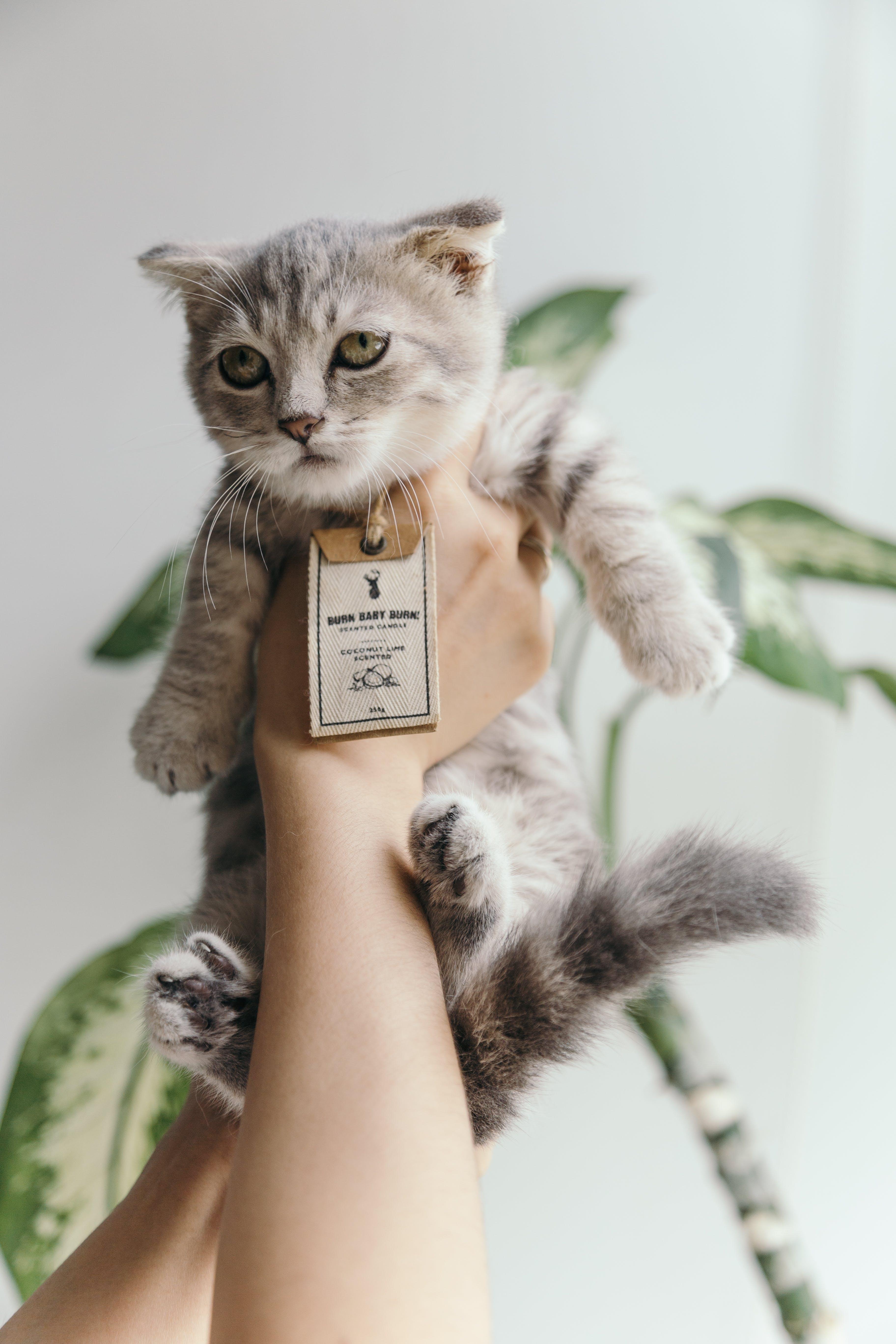 adorable, animal, animal de compagnie