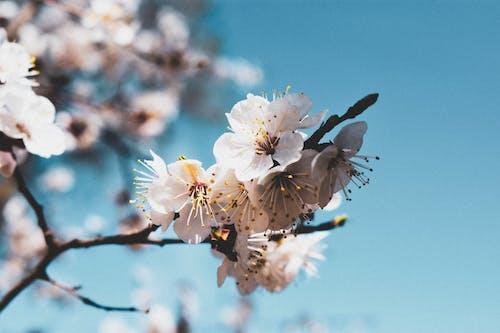 Бесплатное стоковое фото с белый, ветвь, дерево, небо