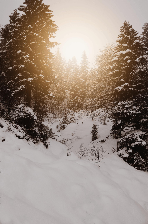 下雪的天氣, 冬季, 冰, 冷 的 免费素材照片