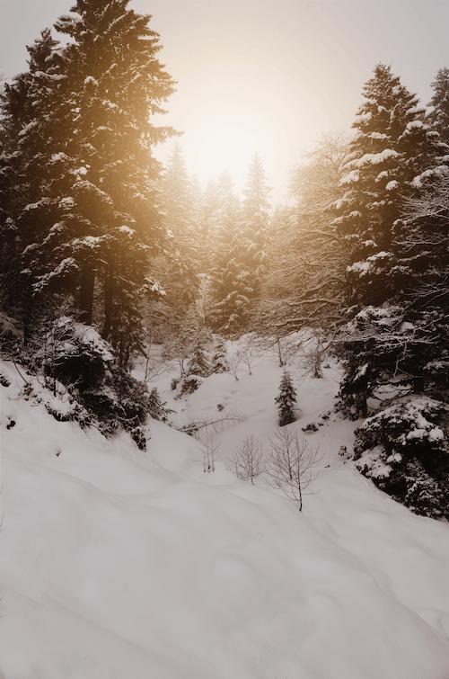 Fotos de stock gratuitas de amanecer, clima helado, con niebla, congelado