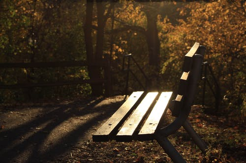 Free stock photo of bench, evening, jared nanasy, nature