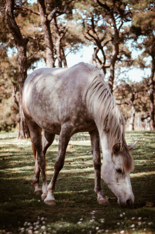 Photo of Gray Horse Grazing on Green Grass Field