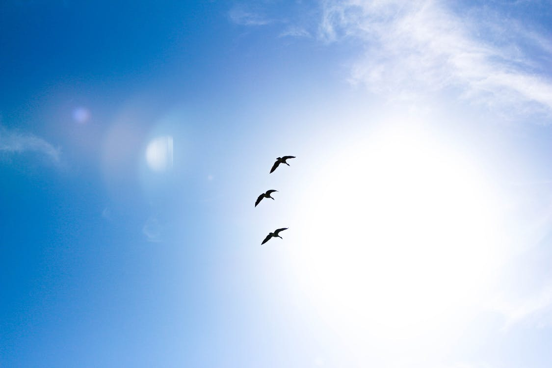 Free stock photo of animals, blue sky, clear sky