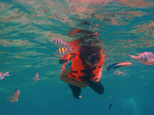 Foto d'estoc gratuïta de aigua blava, busseig, fotògraf, fotografia
