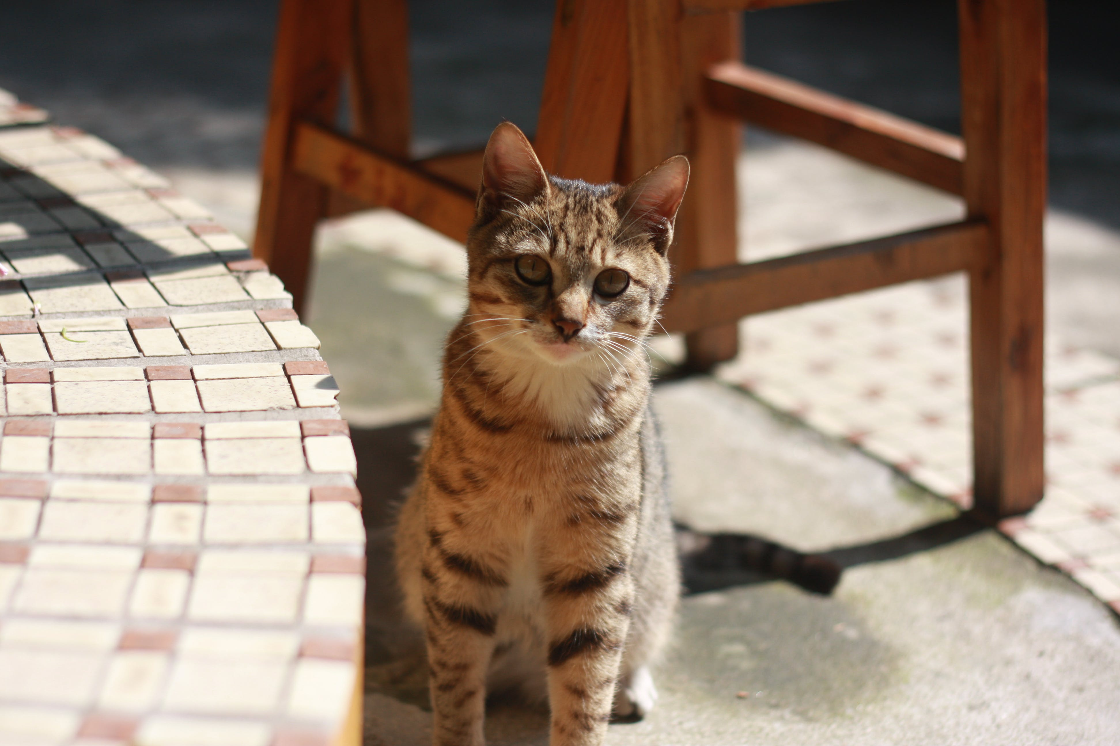 Brown Tabby Cat Sitting on Concrete Floor during Daytime