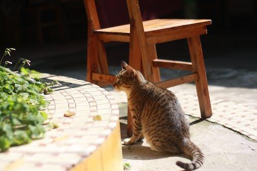 Con Mèo Nâu Và Xám Gần Ghế Gỗ Vào Ban Ngày